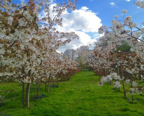 orchard,Swafield Hall