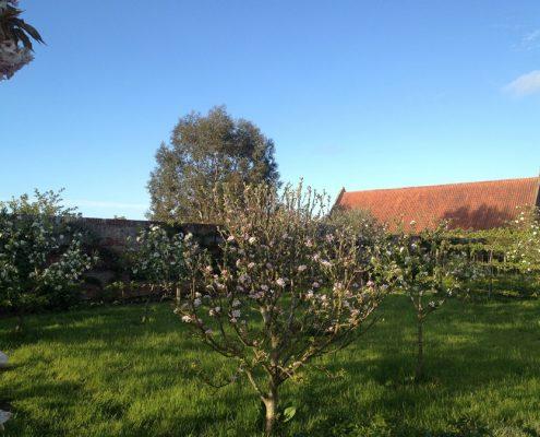walled garden,Swafield Hall