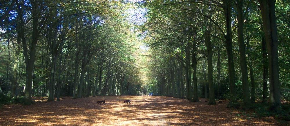 woods Felbrigg