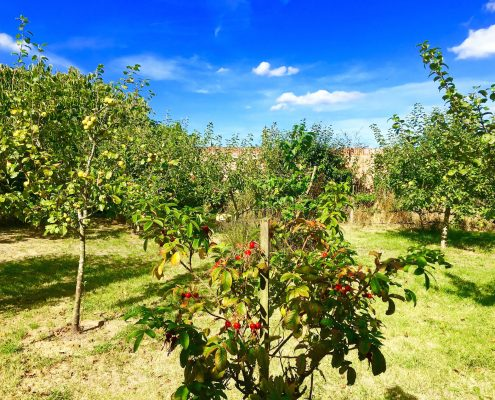 Orchard at Swafield Hall in mid-September
